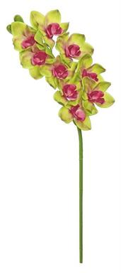 "CYMBIDIUM ORCHID, 34""; 4.5"" BLOOMS, GREEN/BURGUNDY"