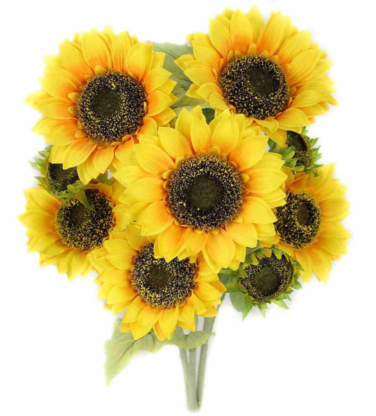 Sunflower bush x 9