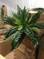 Boston fern bush w/48lvs