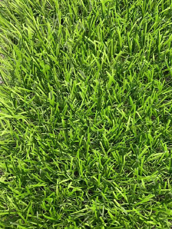 Artificial Grass Carpet - WERONE