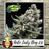 Indica Auto - LADY BUG 2.0 - Biological Seeds