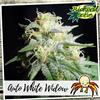Indica Auto - WHITE WIDOW - Biological Seeds