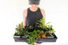 How to Choose a Healthy Houseplant