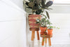 Giving Your Houseplants the Light They Need