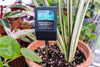 Watering Your Plants with a Moisture Meter