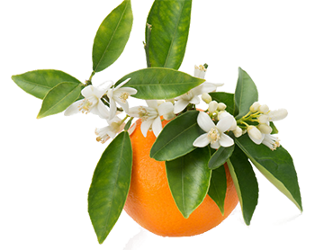 Neroli and Orange Blossom