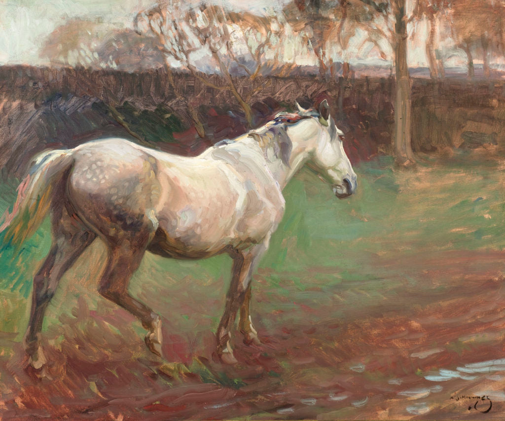 """Irish Grey Mare by Sir Alfred James Munnings. Signed """"A J Munnings"""" (lower right). Oil on canvas, circa 1910."""