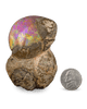 This large jewel, known as a chocolate opal, weighs an amazing 791.61 carats