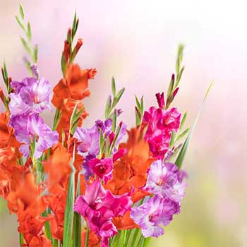 Gladioli flower arrangements