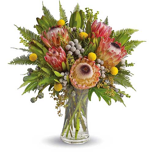 Australian Native Protea Flowers in a Vase