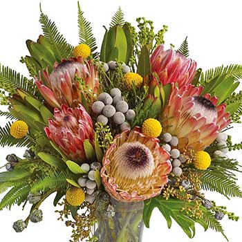 Buy Australian native protea in a Vase