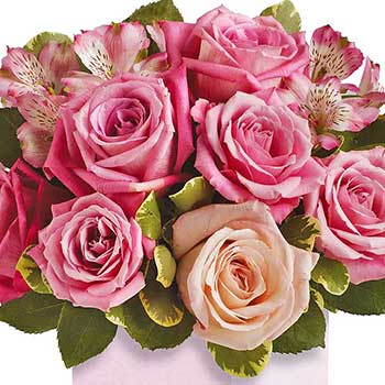 Boxed Roses in Pink