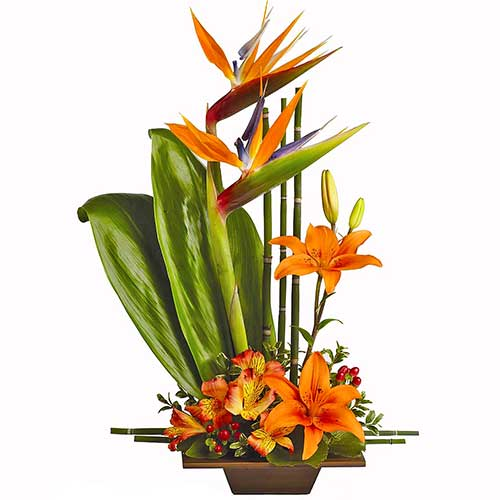 Buy bird of paradise tropical flower arrangement