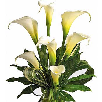 Send white callas flowers in a vase arrangement