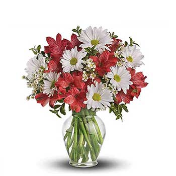 Send daisy & alstroemeria delight