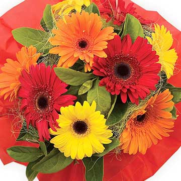 Buy dazzling mixed gerbera bouquet