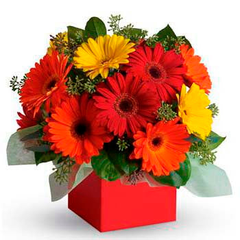Funky Gerbera Flower Box