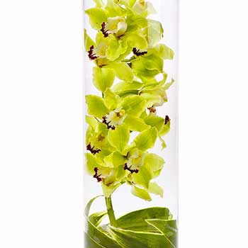Green Cymbidium Orchids Encased in a Cylinder Vase