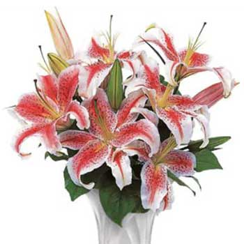 Buy vase full of heavenly lilies