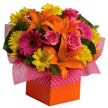 Send citrus & candy colour boxed flower gift