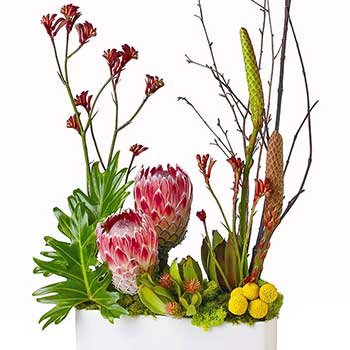 Send modern display of Australian native flowers