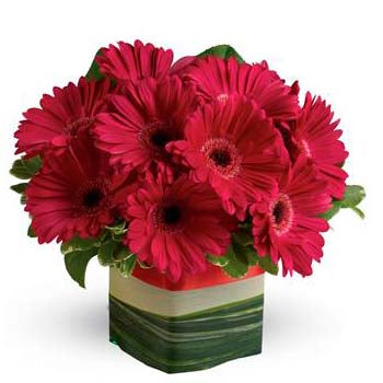 Order glorious pink presentation of gerbera