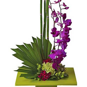 Buy purple dendrobium orchid dish