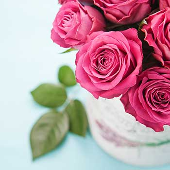 Best Value Dozen Fresh Roses