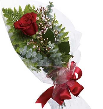 Buy one rose | Single red rose 'delivery included'