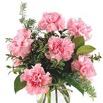 Send six pink carnations & vase - Best Seller | Cheap flowers