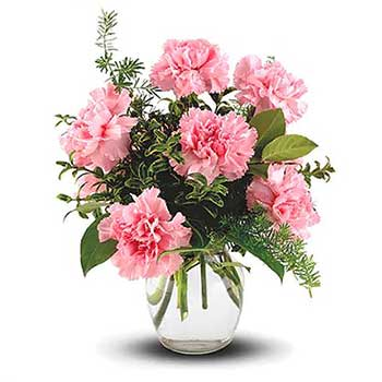 Six Pink Carnations in a Vase