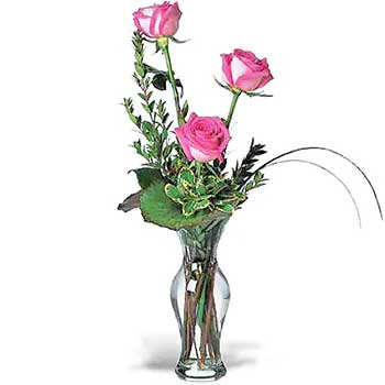 Three Hot Pink Roses in a Vase