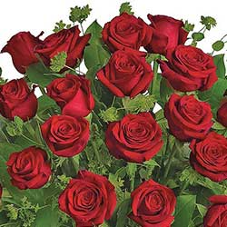 Send the gift of love 24 red roses