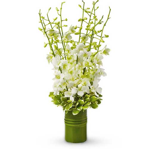 Send tall white orchids in a vase arrangement