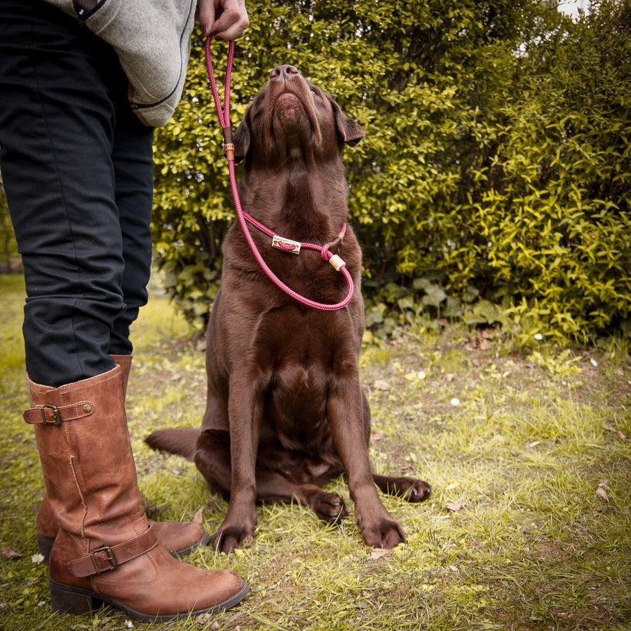 Retrieverleine 8mm Elegant | Lambrusco-Bordeaux - KENSONS for dogs