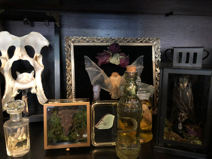 TAXIDERMY & WET SPECIMENS