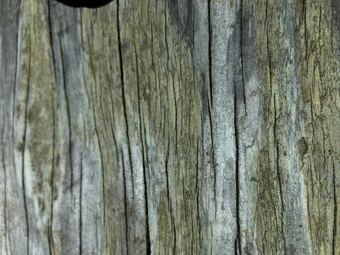 weathered beach wood
