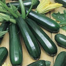 Zucchini Black Beauty Squash