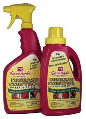 Serenade Conc 32oz