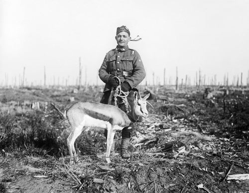 Nancy, springbok mascot of the 4th South African Regiment, in Delville Wood, 17 February 1918.