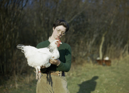 A Land Army girl holding a chicken, 1944.