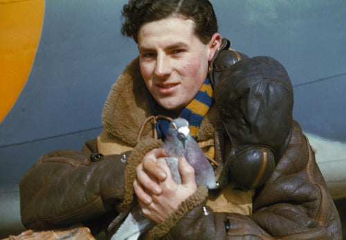 A member of the crew of an RAF Coastal Command Lockheed Hudson holding a carrier pigeon, 1942.