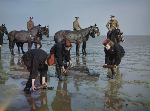 Auxiliary Territorial Service (ATS) girls at the Royal Artillery Experimental Unit at Shoeburyness in Essex, recovering shells from the mud flats at low tide, 1943.