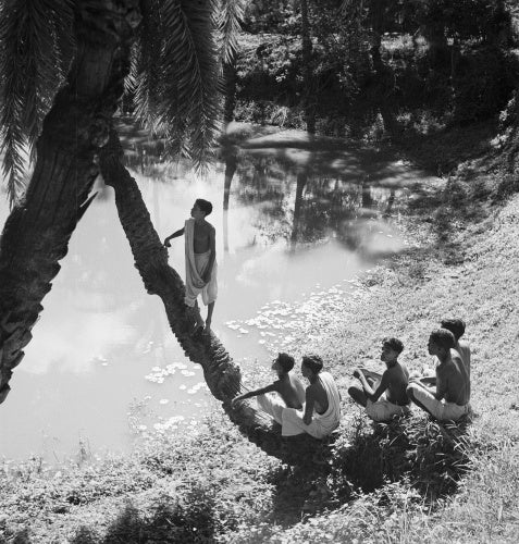 In a Bengali village: A village boy climbs a tree overhanging the river while his friends look on