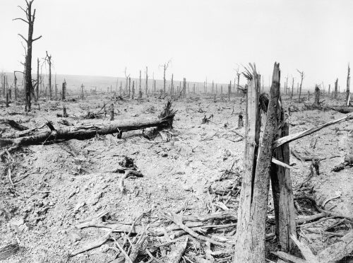 View of the blasted tree stumps in Delville Wood, Somme, 1916