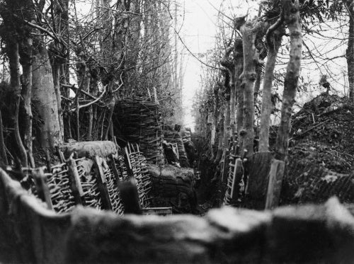 A well concealed and revetted trench, between two-lines of trees. Gommecourt, given up by the Germans in March 1917.