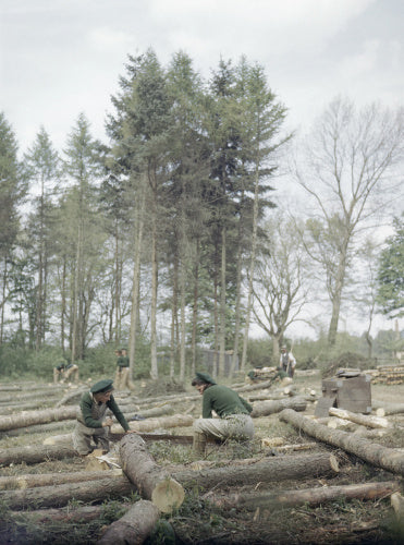 Land Army girls sawing larch poles to lengths for pit props.