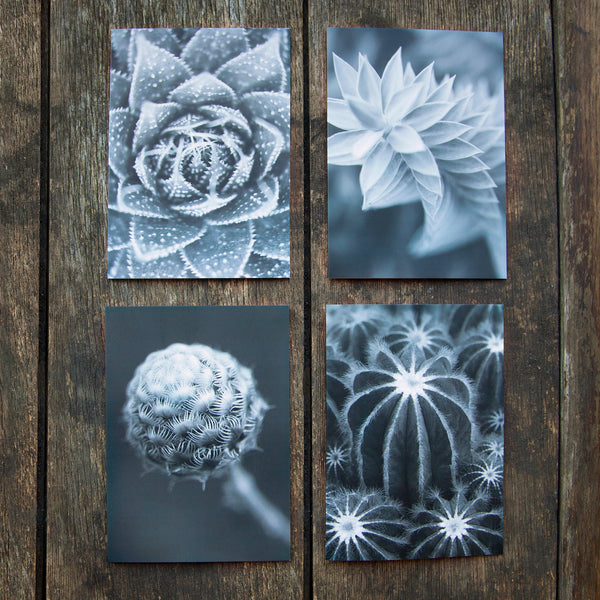 Greeting Cards Selection Pack - Prickles