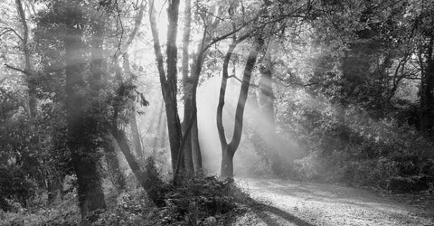 Rays of Light - Beckenham Place Park, London -