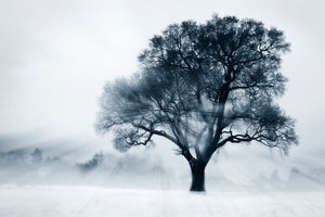 Oak tree in winter - Beckenham Place Park, London -
